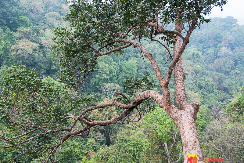 View from Treehouse 7 - The Gibbon Experience - Bokeo Nature Reserve, Laos