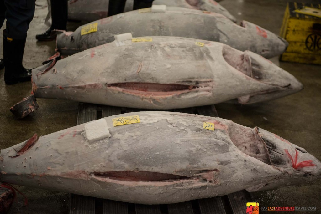 Blue fin tuna on auction at Tsukiji Market in Tokyo.  Japan consumes 80% of the world's blue fin tuna catch