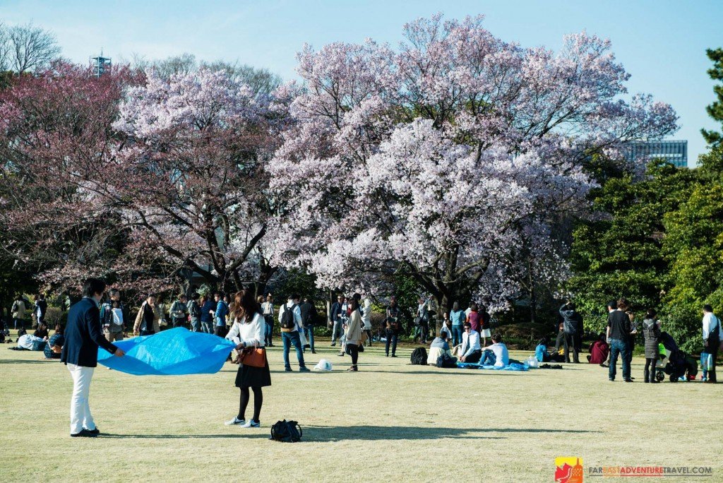 A couple folds up their picnic sheet as The Imperial Palace grounds are closed for the day-One of the best spots for Hanami(cherry blossom viewing) in Tokyo