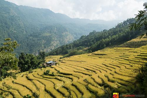 The Kanchenjunga Region of Nepal - Near The Village Of Chirwa