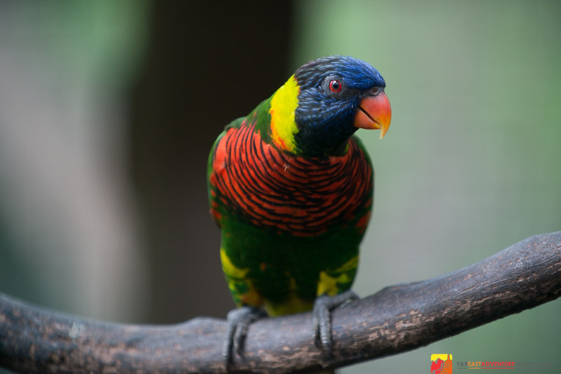 A Coloful Lorrie and one of the residents of Parrot World in The KL Bird Park - Kuala Lumpur, Malaysia