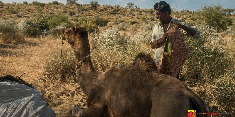 Camel guide Gunput loading up the camels in The Thar Desert-outside of Jaisalmer- Rajasthan, India